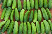 Frische gurken — Stockfoto