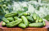 čerstvé okurky — Stock fotografie