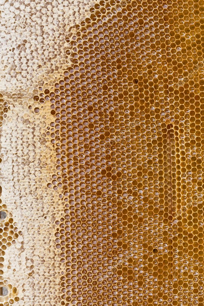 Detail on a honey bee cells — Stockfoto #11971000
