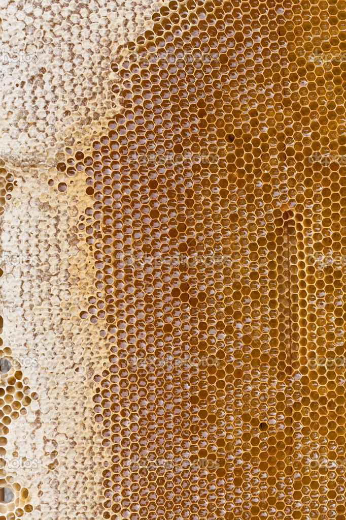 Detail on a honey bee cells — Foto de Stock   #11971000