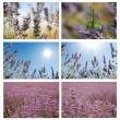 Lavander set. — Stock Photo #12032232