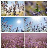 Lavander set. — Stock Photo