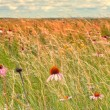 Buffalo Gap National Grassland — Stock Photo