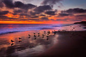 Pacific Sunset — Stock Photo