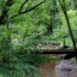 Bridge in Forest — Stock Photo #12232512