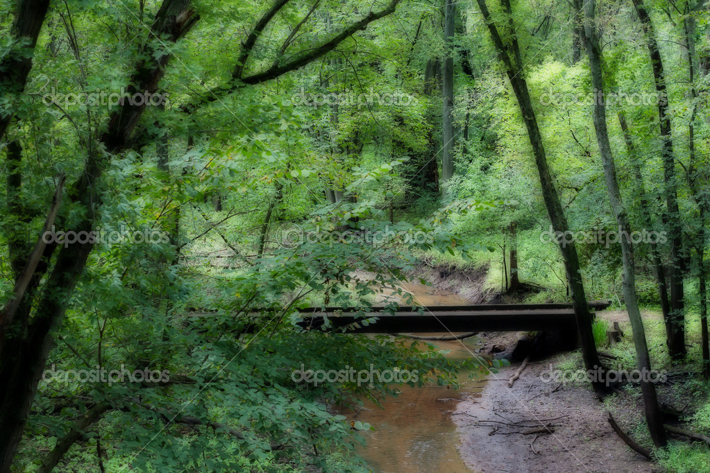 A bridge in the woods covers a placid stream of water.  Stock Photo #12232512