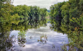 Spring Floods — Stock Photo