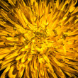 Stock Photo: Dandelion up Close