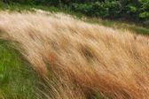 Native Grassland — Stock Photo