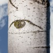 Aspen Eye — Stock Photo