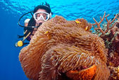 Female Diver and Pink Anemonefish — Stock Photo