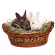 White and grey baby rabbits in a basket — Stock Photo