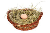 Egg in a basket isolated — Stock Photo