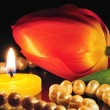 Candle and tulip on dark - Stock Photo