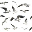 Set of white flying birds isolated. gulls — Stock Photo #12292441