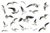 Set of white flying birds isolated. gulls — Stockfoto
