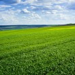 Beautiful green field and clouds — Stock Photo