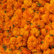 Royalty-Free Stock Photo: Marigold background