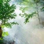 Sunbeam in fairy forest — Stock Photo