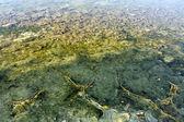 Algaeand ground textures — Stock Photo