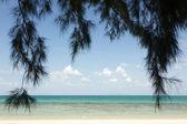 Tropisk strand och träd — Stockfoto