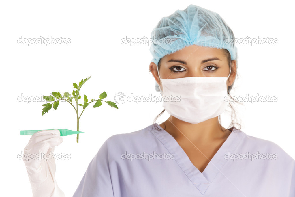 Young scientist holding gmo tomato plant with pincers  Stock Photo #11984564