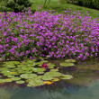 Stock Photo: Small pond in the garden