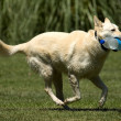 Running dog — Stock Photo #11998506