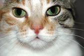 Cat pet — Stock Photo