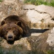 Grizzly Bear — Stock Photo #12004138