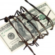 One hundred dollars and barbed wire — Stock Photo