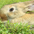Stock Photo: Rabbit isolated