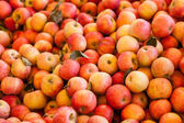 Background of Fuji Apples — Stock Photo