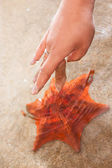 Touching a Starfish — Stock Photo