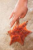 Touching a Starfish — Stock Photo
