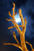 Naked tree at night vertical — Stock Photo