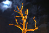 Naked tree at night — Stock Photo