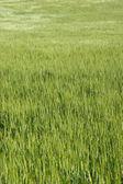 Grass hill — Stock Photo