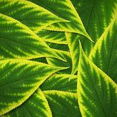 美丽的绿色叶子背景 — 图库照片