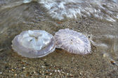 Jellyfish on the sand — ストック写真