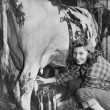 Milking time on the farm — Stock Photo
