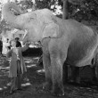 Man feeding elephant with wide open mouth — ストック写真