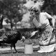 Woman luring turkey to hatchet with corn — Стоковая фотография