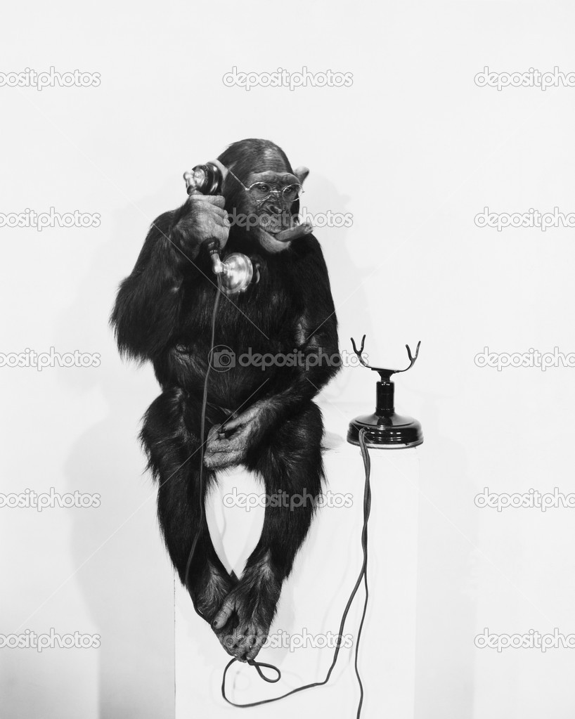 MONKEY BUSINESS — Stock Photo #12287956