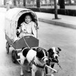 Girl in covered wagon pulled by dogs - Stock Photo