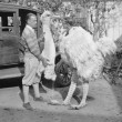 Men with ostrich costume — Stock Photo