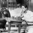 Stock Photo: Mplaying chess with monkey