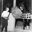 Woman pretending to eat hay bale with horse - 图库照片