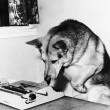 Dog sitting on a chair looking at the typewriter — Stock Photo #12295098
