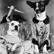 Two dogs sitting on a couch with a dog attaching them from behind with a knife — Stockfoto
